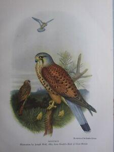 BEAUTIFUL BIRD PRINT ~ KESTREL ~ JOSEPH WOLF