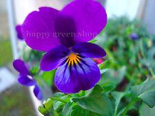 HORNED PANSY MIX - BAMBINI - Viola cornuta - RARE - 300 seeds - FLOWER