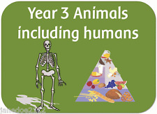 KS2 Year 3 Science topic ANIMALS inc HUMANS Primary teaching resources on CD
