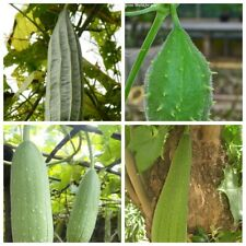 20 Luffa Vegetable Seeds Rare 4 Kinds Annual Garden Plants Healthy Diet Organic