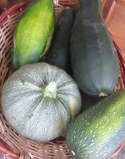 ♫ COURGETTE Mélange des Variétés - Cucurbita pepo ♫ Graines ♫ Potagère Gustative