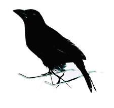 Dohle schwarz Halloween Horror Vogel Rabe krähe DEKO Raven
