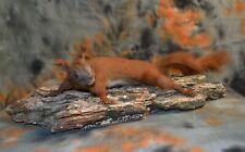 Taxidermy Red squirrel Stuffed trophy Handmade