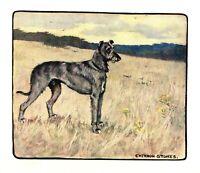 1906 Antique SCOTTISH DEERHOUND Print Vernon Stokes Dog Art Illustration 3936k