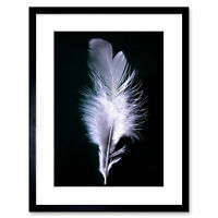 Photo Modern Black White Feather Bird Framed Print 9x7 Inch