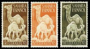 SPANISH SAHARA ESPAÑOL ANIMAL CAMEL full MLH set (3) 1951 #B16-8 Mi 122-4