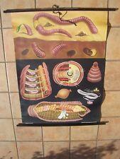 1960's German School Pull Down Poster (Earthworm)