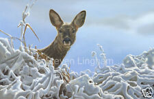 Deer 'Winter Roe Doe' by Steven Lingham Limited Edition Giclee Wildlife Print