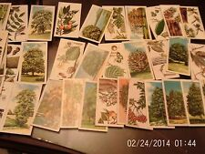 brooke bond tea cards trees in britian x 37 some doubles