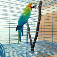 Pet Parrot Wood Fork Stand Rack Toy Branch Perches For Bird SELL Cage 15cm U3H6