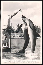 ISLAMORADA FL KEYS Theater of The Sea Dolphins Porposes Vtg RPPC Postcard Old PC