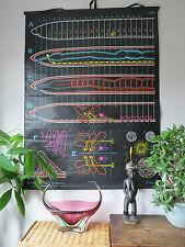 STRIKING VINTAGE DR AUZOUX PULL DOWN ZOOLOGICAL SCHOOL CHALK CHART OF A WORM