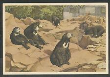 """Verkade's Album """"Dierenleven in Artis"""" G Maleise- of Honingberen in hun rotspark"""
