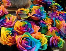 80 SEMI DI ROSA Rainbow