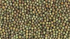 Austrian Winter Peas, wildlife/Deer food plot, 10 lbs, fresh seed