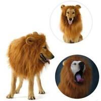 Großer Hund Löwenmähne Perücke Hundehalsband Haustier Labrador Retriever Kostüms