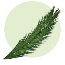 artplants Künstlicher Phönix Palmwedel JAIME 105cm Plastik Palmenwedel