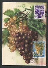 BULGARIA + RSM MK 1956 FLORA WEINTRAUBE TRAUBE GRAPE MAXIMUM CARD MC CM d8119