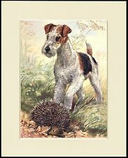 WIRE FOX TERRIER AND HEDGEHOG CHARMING DOG PRINT MOUNTED READY TO FRAME