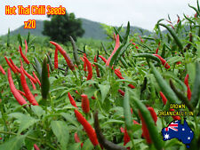 Hot Thai Chilli 20 Birds Eye Chili Seeds Very Spicy Asian Food Organic