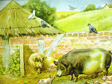 Farm Animals MOTHER PIG & BABY PIGLETS 1899 Antique Chromolithograph Art Matted