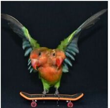 More details for 2 headed love bird -taxidermy