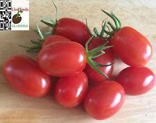 Tomato 'Sweet Cherry Plum ' 20 Finest UK Crop Seeds