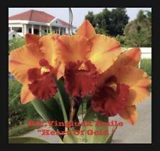 Rlc Yingluck Smile 'Heart Of Gold' Nbs 4� Pot (15) Sh#64