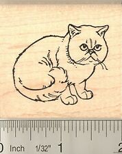 Shorthaired Persian Cat Rubber Stamp G10605 Wm pet, kitty, exotic shorthair