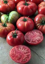 Champion II Tomato Seed