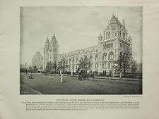 1896 VICTORIAN LONDON PRINT + TEXT ~ NATIONAL HISTORY MUSEUM SOUTH KENSINGTON