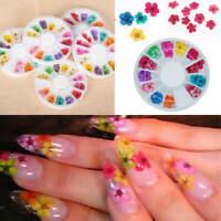 12 Colour Nail 3D Art Dried Dry Flowers Wheel Gel False Nails Tips Manicure UK
