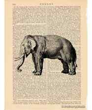 Elephant Art Print on Antique Book Page Vintage Illustration Largest Land Animal