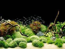 Tetra cartel de fondo de acuario peces tanque telón de fondo de mar 2 lados 60x45cm