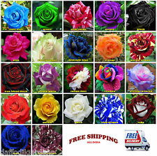 5 Seeds Each Rose Flower Seed 22 Varieties Total 110 Seeds Rare Collection Combo
