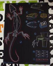 Jung-Koch-Quentell Zoology Art School Poster Auzoux Green Lizard Lézard vert