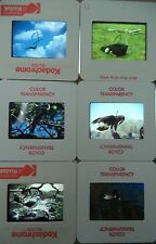 6 Original Vintage 35mm Kodak Photo Color Slide Animals Kodachrome Transparency
