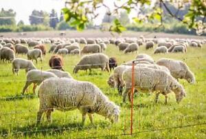 Filet cloture hauteur 105cm ELECTRIFIABLE Longueur 50m pour mouton,chèvre,ovin
