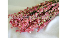 NATURAL AIR DRIED PINK LARKSPUR FLOWERS FLORAL FOLIAGE FLOWER