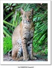 Wild Bobcat (Lynx Art Print / Canvas Print. Poster, Wall Art, Home Decor - H