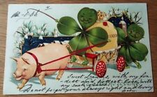 Early Greetings Pigs / clover Postcard  1906