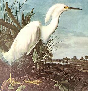 John James Audubon Birds SNOWY EGRET Original Vintage Art Book Plate