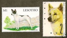 Dog Art Stamp Collection Israeli Canaan Dog 2 Different Israel Lesotho H&B Mnh