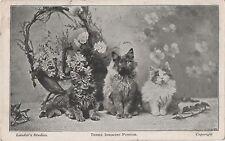 POSTCARD  ANIMALS  CATS   Three Innocent Pussies