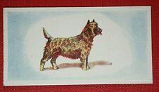 CAIRN TERRIER    Original 1950's Colour Mini Card