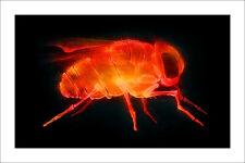 Shok1 « x-ray fly » Sérigraphie sign-num/50 +COA /dolk/C215/walker/whatson/ludo