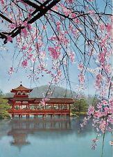 BG33814 japan cherry heian shrine
