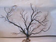 Black Sea Fan Large (1) - Coastal Home Decor - Reef Coral Seashells - Sea Coral