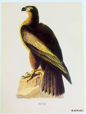 "Audubon Print Birds of America ""BALD EAGLE"" by Roger Tory Peterson"