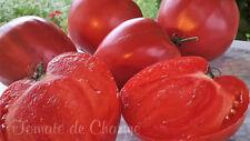 10 graines de tomate rare Сœur de Boeuf Seigneur de Minusinsk tomato seeds bio